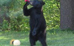 - One of the many black bears Brother B. has faced off against.